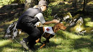 unsicherer hund prescht vor